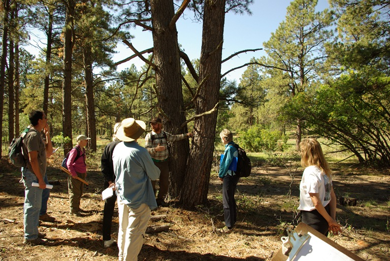 Citizens learn from regional experts about how to measure trees.